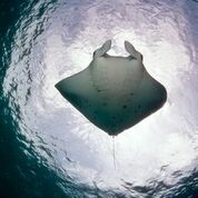 7 nights and 8 days yoga & diving holiday at island spa retreat maalhos, maldives1021525950892.jpg