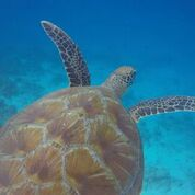 7 nights and 8 days yoga & diving holiday at island spa retreat maalhos, maldives651525950901.jpg