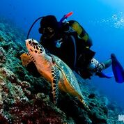7 nights and 8 days yoga & diving holiday at island spa retreat maalhos, maldives981525950892.jpg