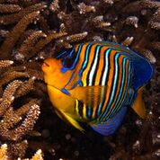 7 nights and 8 days yoga & diving holiday at island spa retreat maalhos, maldives991525950893.jpg
