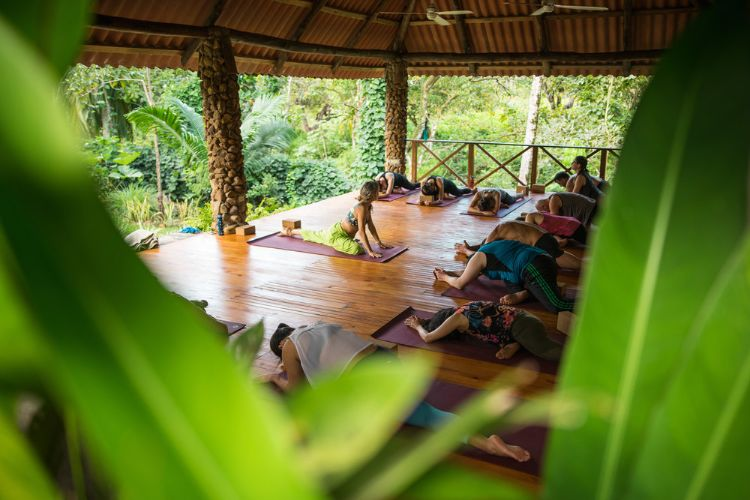 8 days 7 nights women's surf & yoga immersion retreat, panama361575114458.jpg